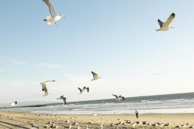 Hvordan fange Seagulls
