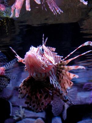 Hvordan å mate saltvannsfisk mens på ferie