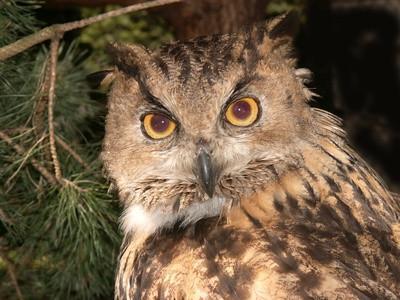Owl Pellets Prosjekter