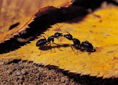 Hva Organismer Spis insekter