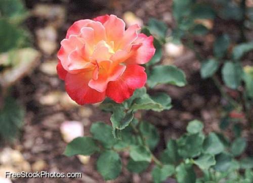 Hvordan virker lys farge påvirker plantevekst?