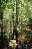 Plant Livet i Wetlands