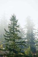 Truede Coniferous Dyr