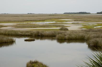 estuarine økosystemer