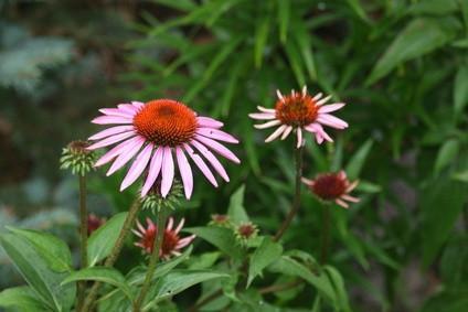 Blomster i Arkansas