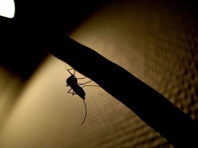Hjemmelaget Natural Insect Repellenter