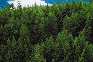 Ting som blir gjort for å hjelpe til med avskoging
