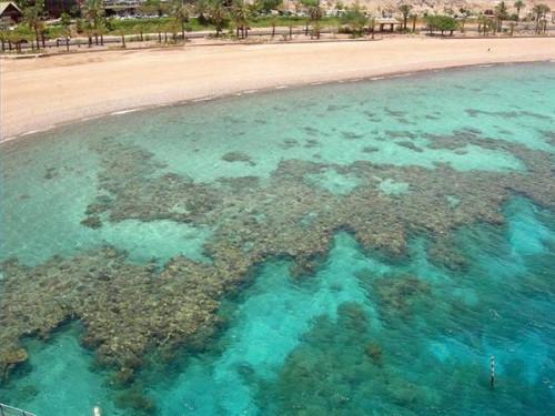 Hva er en Fringing Reef?