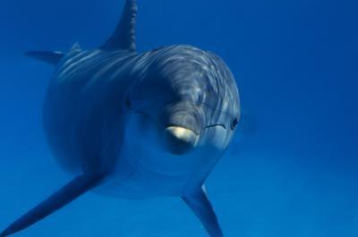 Dolphins økologiske betydning