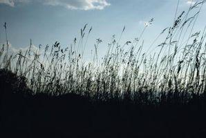Biotiske faktorer i Grass Biom