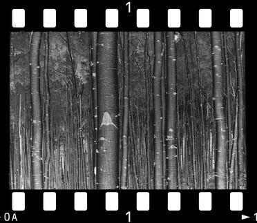 Hvordan utvikle Vintage Photo Paper