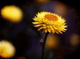 Deler av en blomst Stem