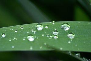 Hvorfor er vannets kretsløp Viktig for mennesker og planter?