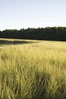Wetland Planter og trær