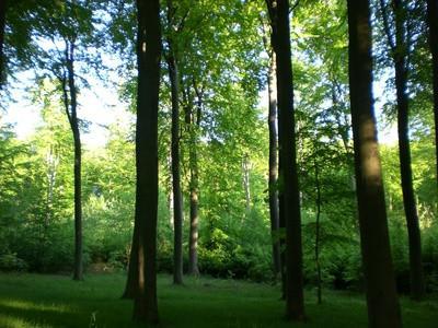 Dyr Funnet i skogen