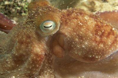 Interessante Typer av Octopus