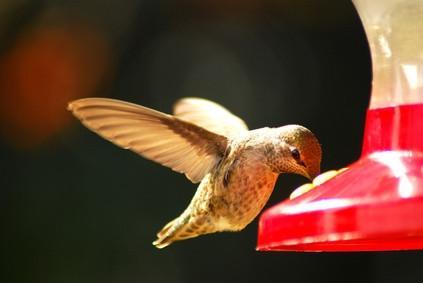 Hvordan lage fuglemat med Organic Sugar