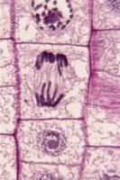 Mulige Cellular Biology emner